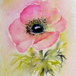 Watercolour painting. Pink Anemone (SPA009) Artist: Seonaid Parnell