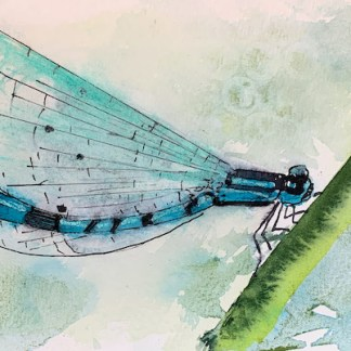 Watercolour painting. RWB0082 Damsel Fly 2. Artist: Vandy Massey