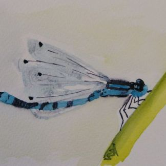 watercolour painting. Damsel Fly (RWB0082). Artist: Vandy Massey