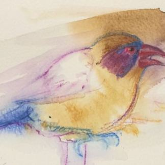 Watercolour painting. RWB036 Violet Eared Waxbill Artist: Lori Bentley