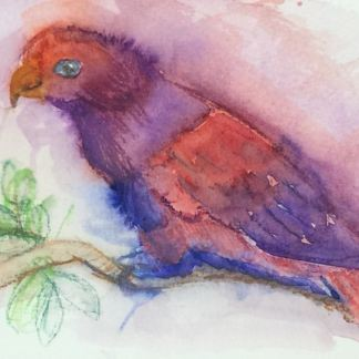 Watercolour painting. LBA037 Violet-Necked Lory. Artist: Lori Bentley