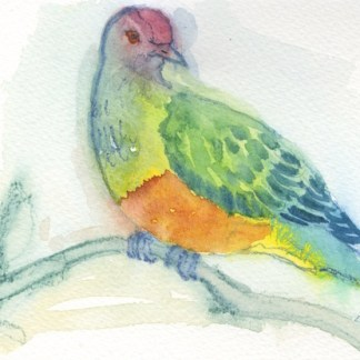 Watercolour painting. LBA042 Rose-Crowned Fruit Dove. Artist: Lori Bentley