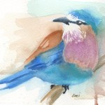 Watercolour painting. LBA047 Lilac-breasted Roller. Artist: Lori Bentley