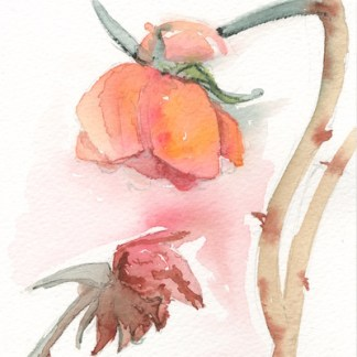 Watercolour painting. LBA049 Last Blooms. Artist: Lori Bentley