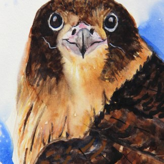Watercolour painting. LBW016 I'm Surprised. Artist: Lorraine Brown