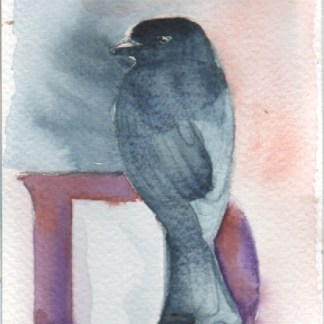 Watercolour painting. LBA061 Fork-tailed Drongo. Artist: Lori Bentley