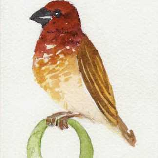 Watercolour painting. LBA074 Quelea. Artist: Lori Bentley