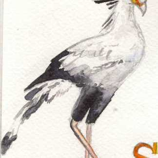 Watercolour painting. LBA076 Secretary Bird. Artist: Lori Bentley