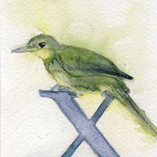 Watercolour painting. LBA081 Xavier's Greenbul. Artist: Lori Bentley