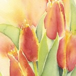 Watercolour painting. SPA 011 Orange Tulips. Artist: Seonaid Parnell