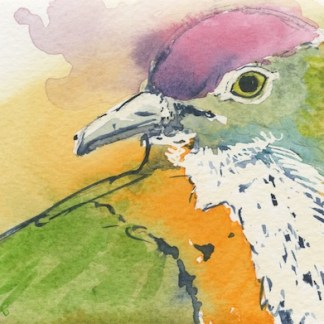 Watercolour painting. LBA087 Superb Fruit Dove 2
