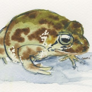 Watercolour painting. LBA089 Bullfrog.