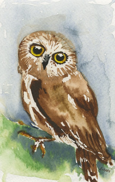 Watercolour painting. LBA090 Little Owl.