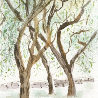 Watercolour painting. RWB0193 - Olive Grove. Artist: Vandy Massey