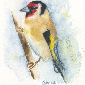 Watercolour painting. SWA007 - Goldfinch.