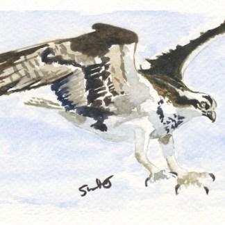 Watercolour painting. SWA010 - Osprey.