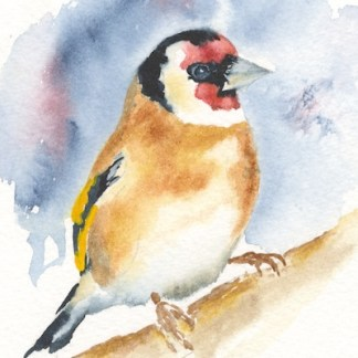 Watercolour painting. SWA013 - Goldfinch2