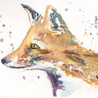 Watercolour painting. MCA013 Foxy Face. Artist: Margot Cornish