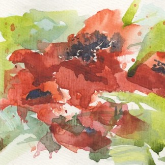 Watercolour painting. RWB0310 Isolation Poppies. Artist: Vandy Massey