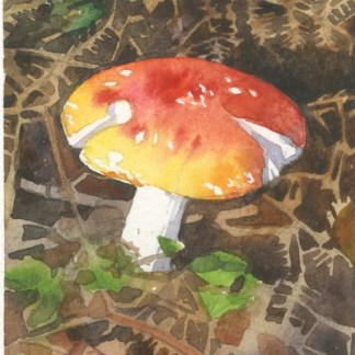Watercolour painting. HO006 Fly Agaric. Artist: Helen Otter