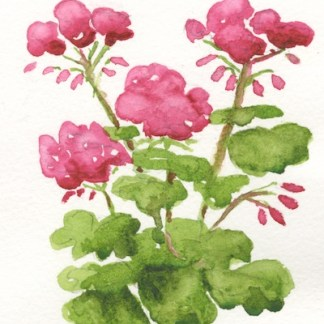 Watercolour painting. SHA002 Geraniums. Artist: Sarah Haynes