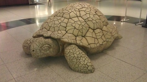 Giant turtle at McCarran Airport in Vegas.  He runs about as fast as I do....