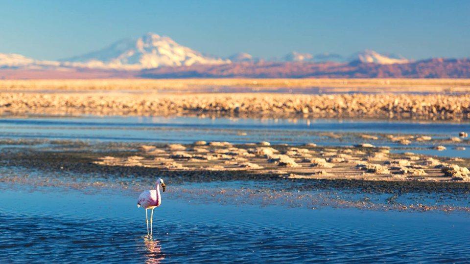 Run 250km in an Otherworldly Desert at the Atacama Crossing!