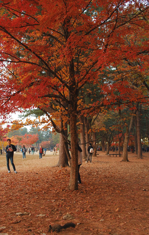 10 Reasons to go Sightseeing in Korea After Running an Autumn Marathon