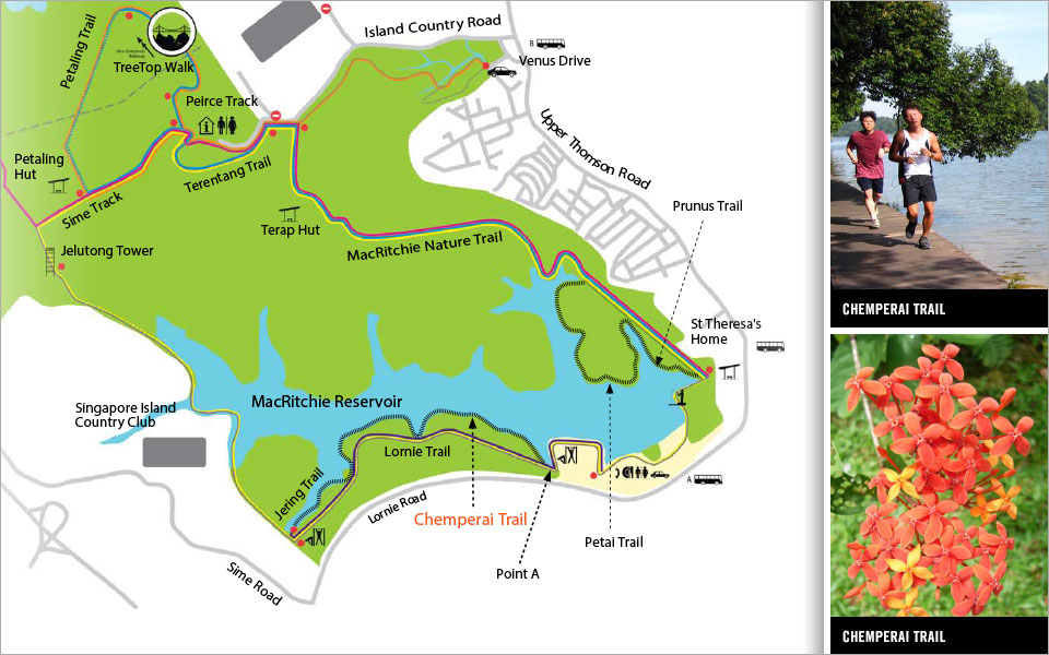 Chemperai Trail at the MacRitchie Boardwalk