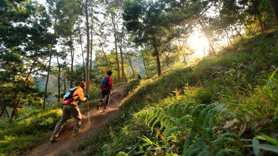 MesaStila Challenge & Ultra: Immerse Yourself in the Heart of Java