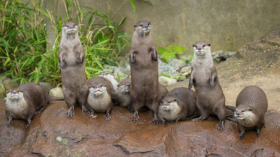 Another Reason to Run At Bishan-Ang Mo Kio Park: Cute Otters!