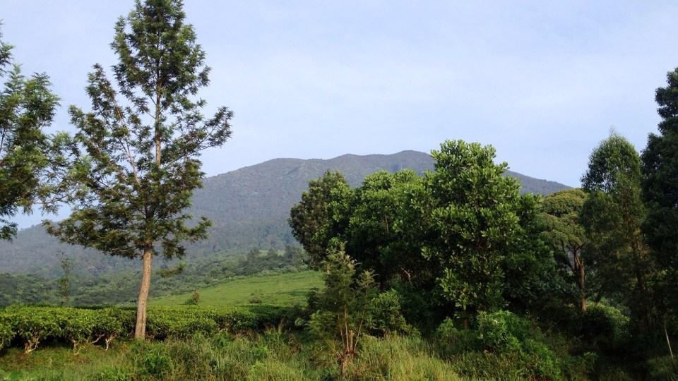 Gede Pangrango Marathon: Jakarta's Mountain Trails Awaits