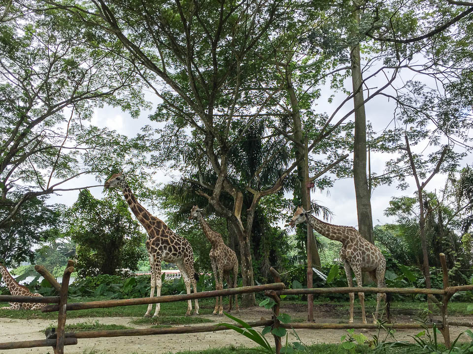 Safari Zoo Run 2017 Race Review