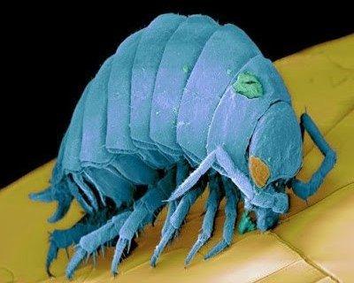 تحت الميكرسكوب : شاهد عالم الحشرات كما لم تراه من قبل ! 11