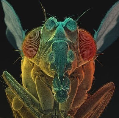 تحت الميكرسكوب : شاهد عالم الحشرات كما لم تراه من قبل ! 19