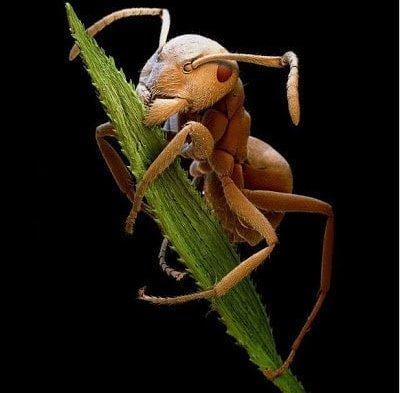 تحت الميكرسكوب : شاهد عالم الحشرات كما لم تراه من قبل ! 23