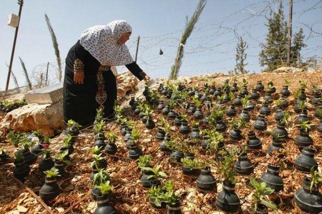 حياة تهزم المأساة : حديقة قنابل الغاز في قرية بلعين بالضفة الغربية ! 2