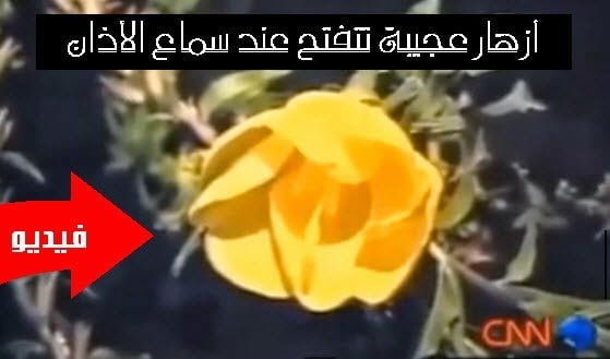 أزهار الأذان : شاهد تقرير CNN عن أزهار عجيبة تتفتح عند سماع الأذان ! 7