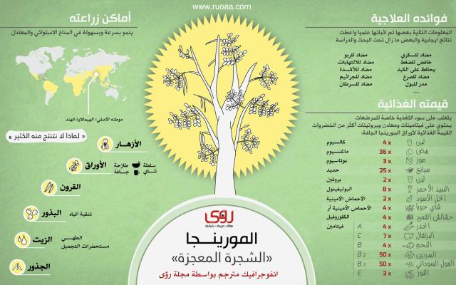 إنفوجرافيك : فوائد شجرة المورينجا - الشجرة المعجزة