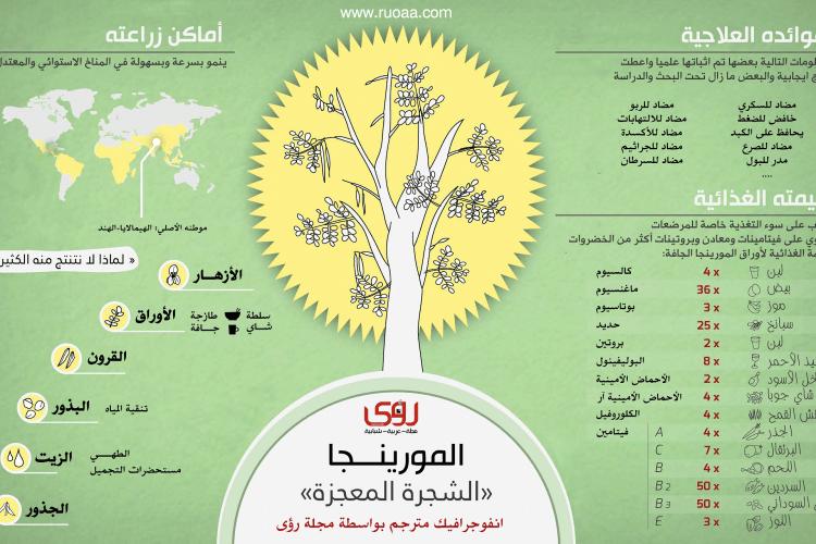 إنفوجرافيك : فوائد شجرة المورينجا - الشجرة المعجزة 10