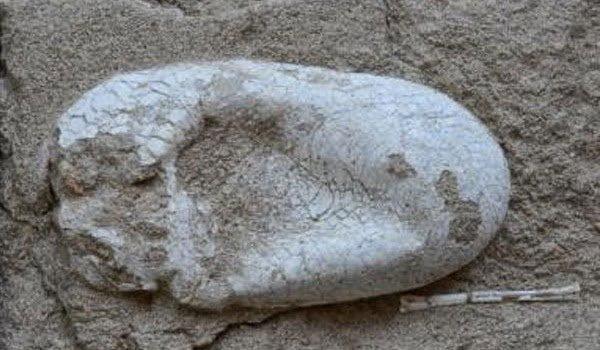 علماء صينيون يعثرون علي بيضة ديناصور عمرها 120 مليون سنه !