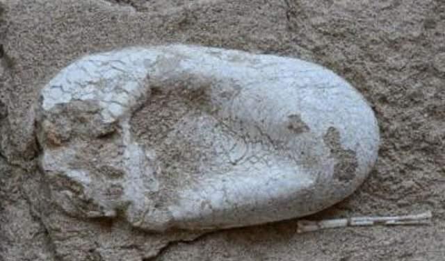 علماء صينيون يعثرون علي بيضة ديناصور عمرها 120 مليون سنه ! 1