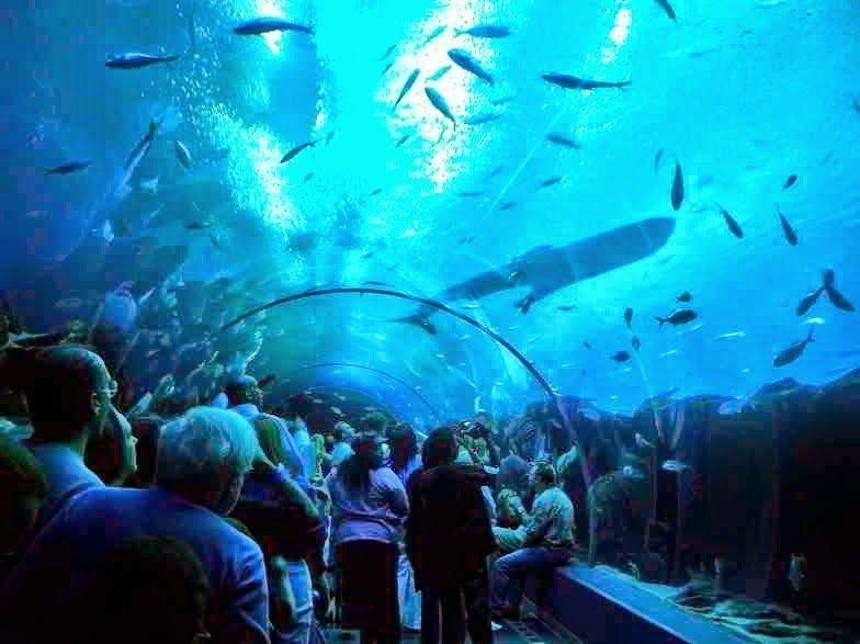 أكبر و أهم 10 أحواض زجاجية للأسماك في العالم !