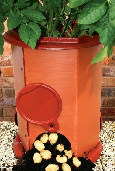 7 طرق لزراعة البطاطس (البطاطا) بنفسك في منزلك 9
