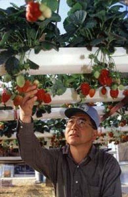 تقنيات الزراعة بدون تربة : الهيدروبونيك - الأيروبونيك - الأكوابونيك 3