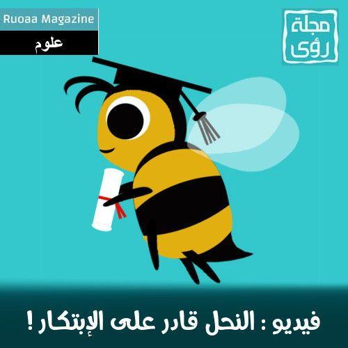 فيديو : النحل قادر على التفكير و الإبتكار !!