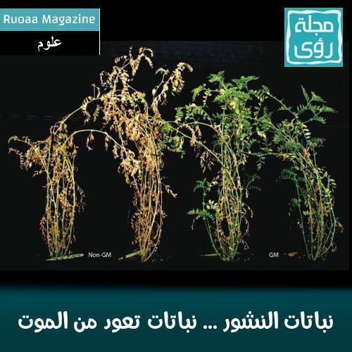 نباتات النشور ... نباتات تعود من الموت 2