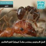 هل النمل الابيض أول مزارعي العالم؟ 6
