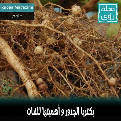 بكتريا الجذور صديقة النبات - ترجمة إبراهيم العلو 1