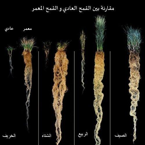 نباتات خارقة يمكنها إنقاذ العالم ! 1